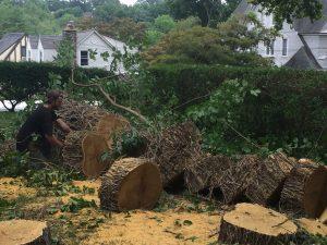 Tree Services Bronx