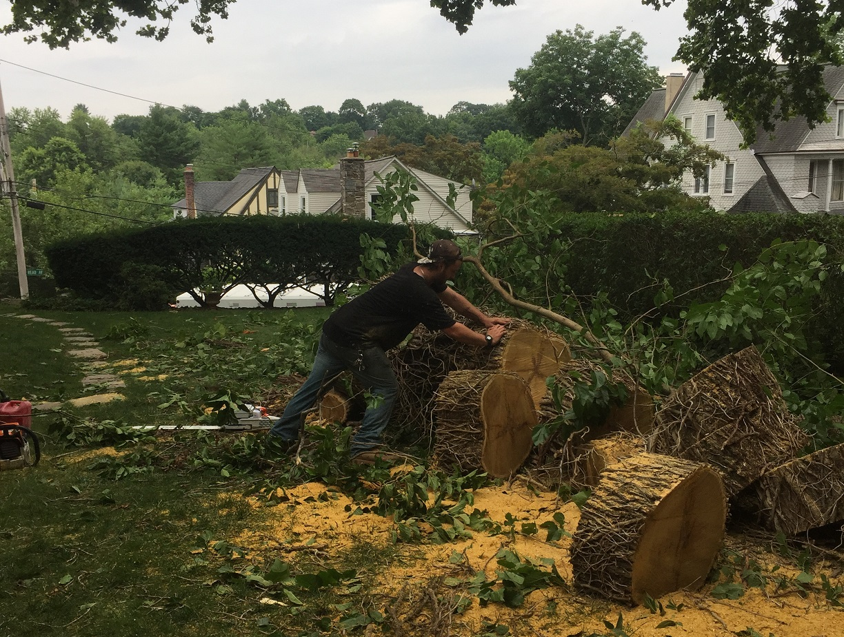 bronx tree removal experts