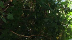 DIY Pruning - Bronx Tree Service